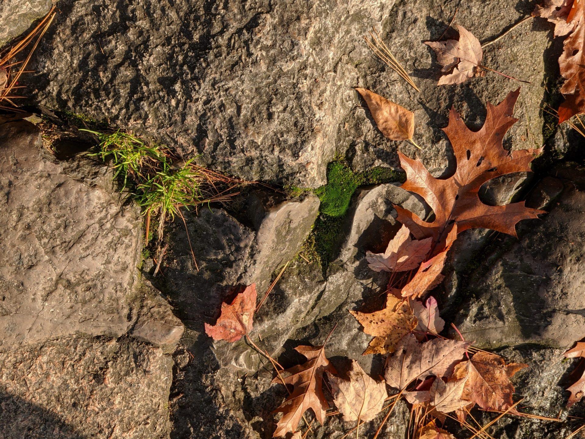 Leaves on rock - October 2020