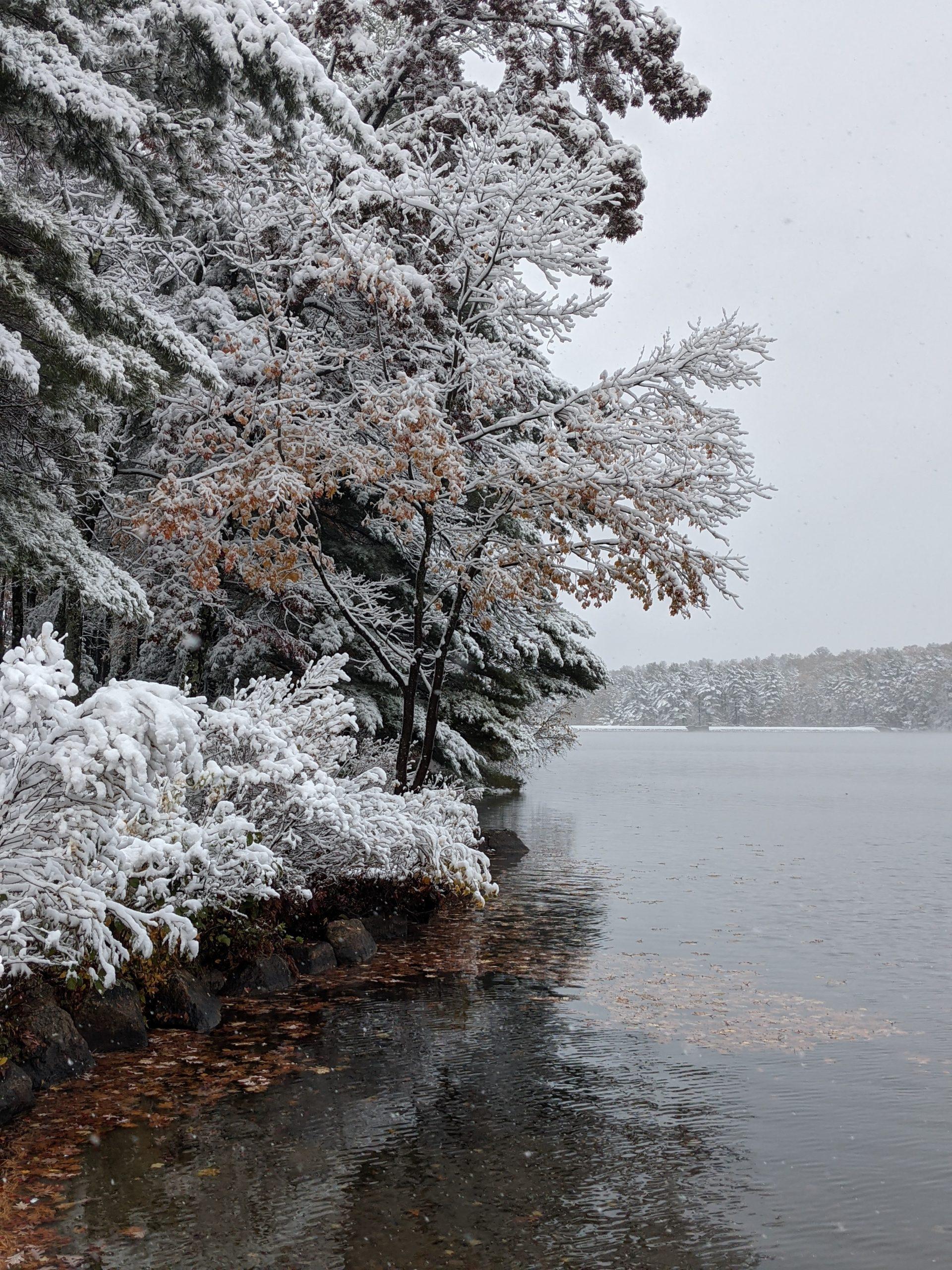 Snow coated foliage on lakeshore - October 2020